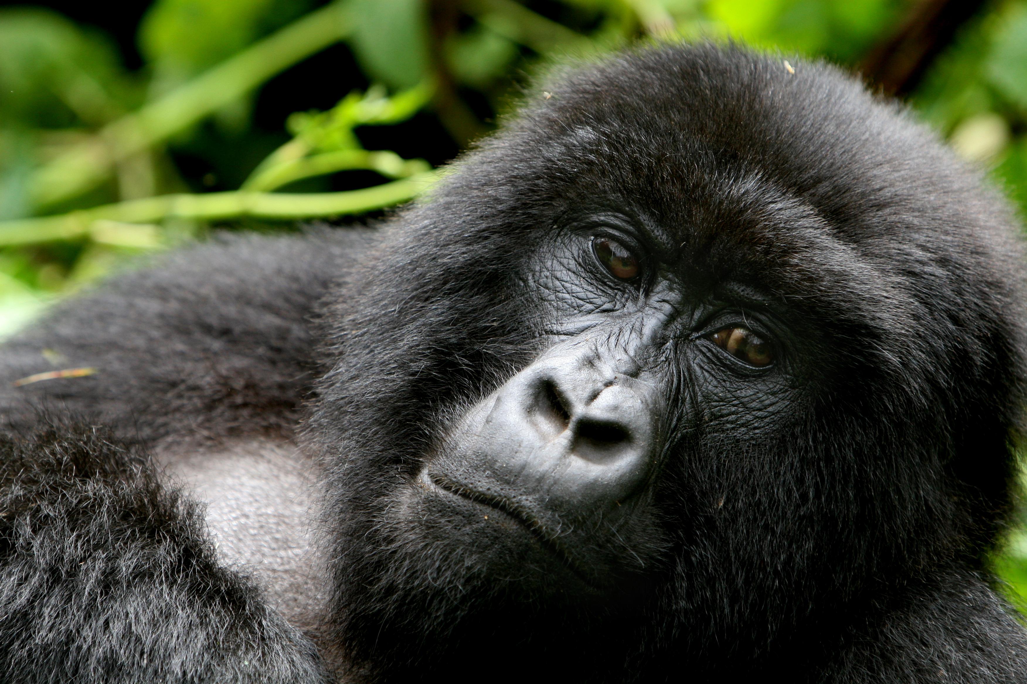 Wildlife Tours - Rwanda Cover Image